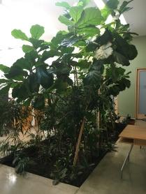 indoorgarden